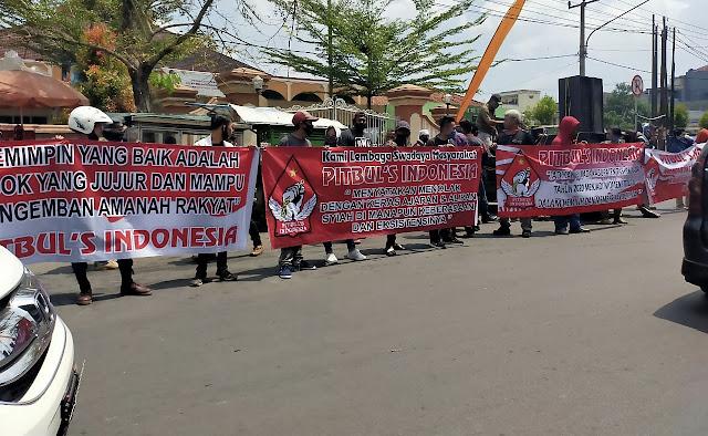 Pitbul's Indonesia Gelar Aksi Tolak Syiah di Pilkada Serentak Tasikmalaya 2020