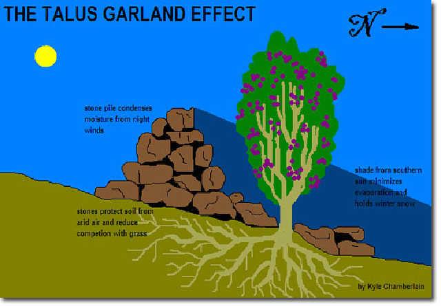 Talus+Garland+Effect.jpg