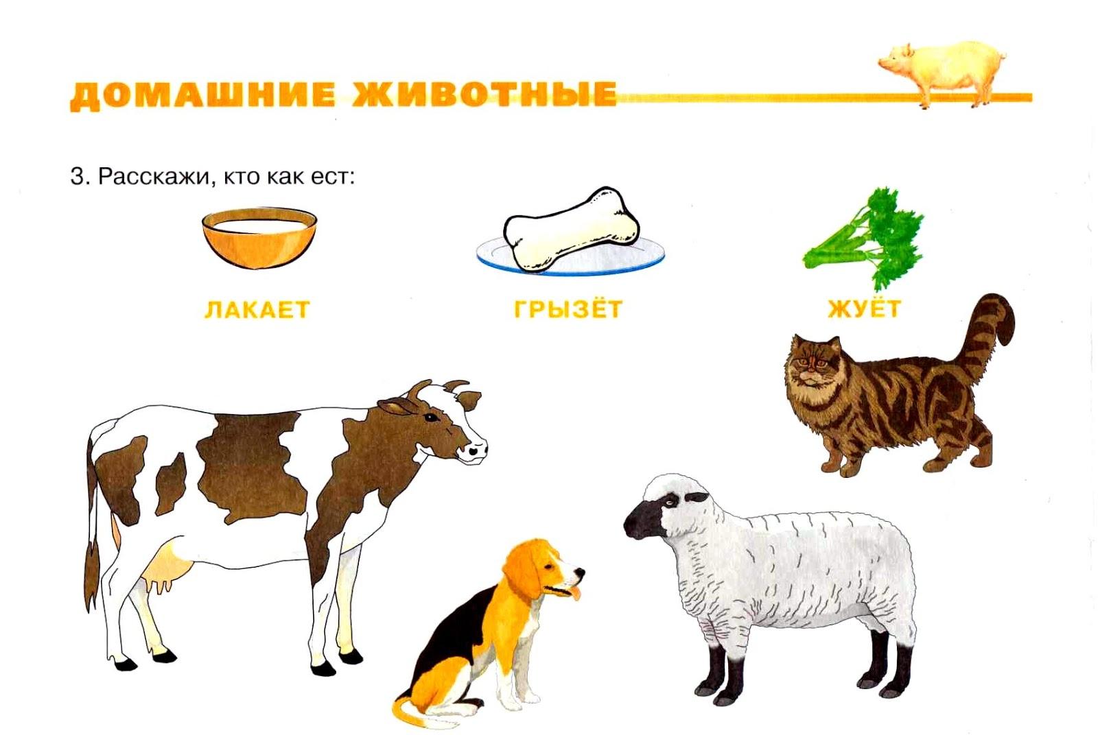 Домашние животные кто что делает картинки