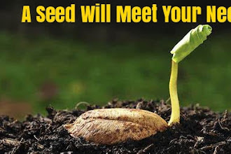 A Seed Will Meet Your Need