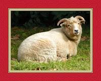 Interpretation of seeing lamb in a dream by Abdul-Ghani Al-Nabulsi