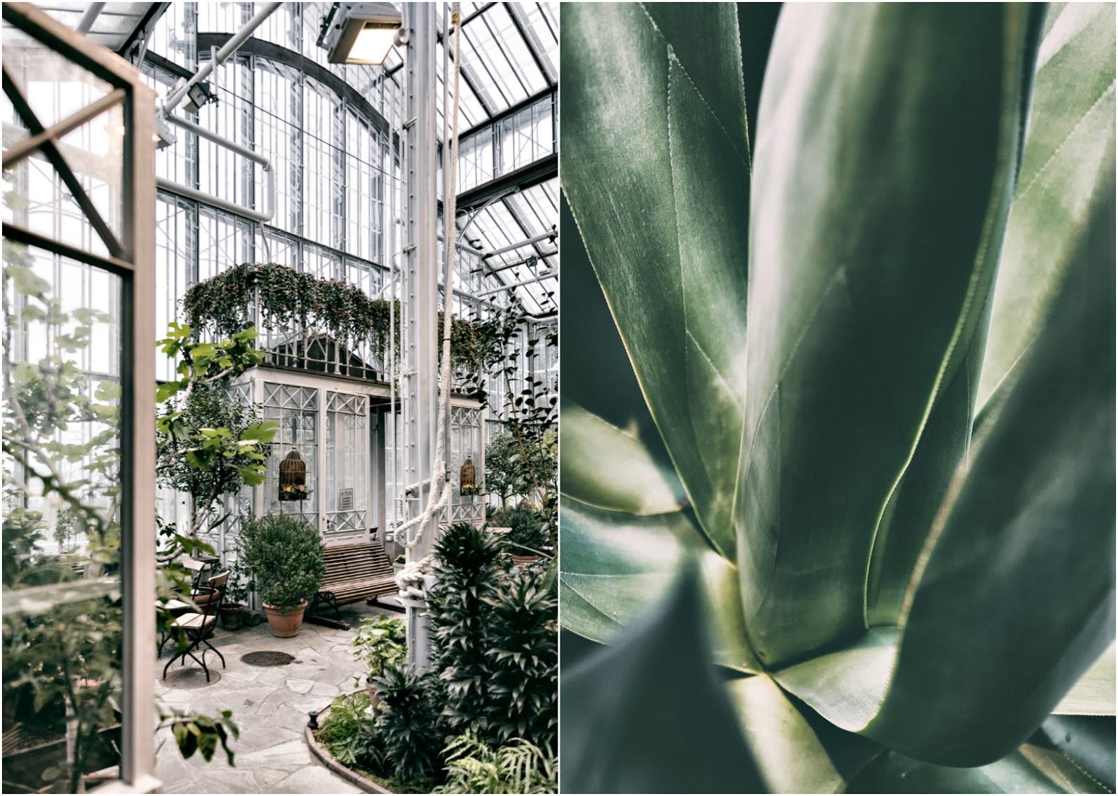 Talvipuutarha, Helsinki, myhelsinki, visithelsinki, garden, orangerie, puutarha, kasvit, kukat, viherkasvit, valokuvaaja, Frida Steiner, Visualaddict, visualaddictfrida