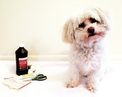Summer Health Tips for Pet from Bayer Animal Health