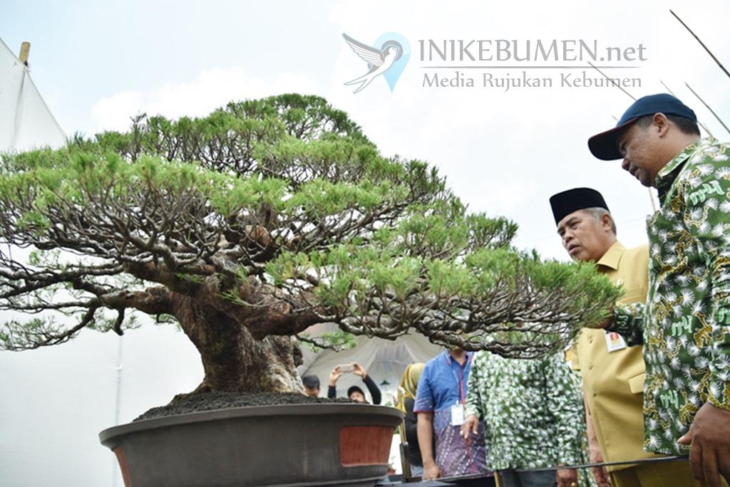 Digelar Perdana, Ratusan Bonsai Dipamerkan di Alun-alun Kebumen