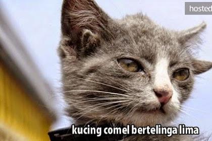 Kucing Lucu Ini Memiliki 5 Telinga
