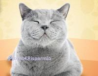 Logo Schesir ''Gratta il musetto e vinci'' : gratis forniture di prodotti e servizio fotografico per il tuo gatto