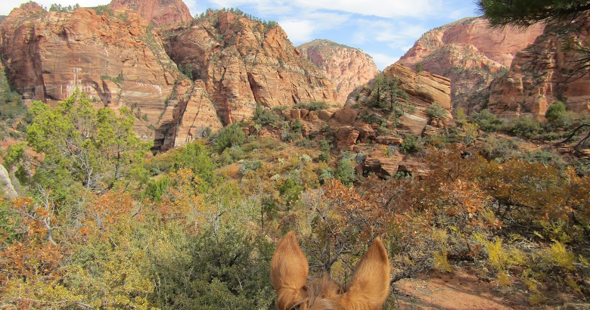 Holly's Horse Tales and Trails: Hop Valley (Zion NP), Pine ...