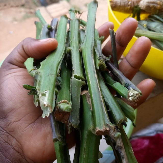 njama njama, huckleberry stems, stick, plant, planting