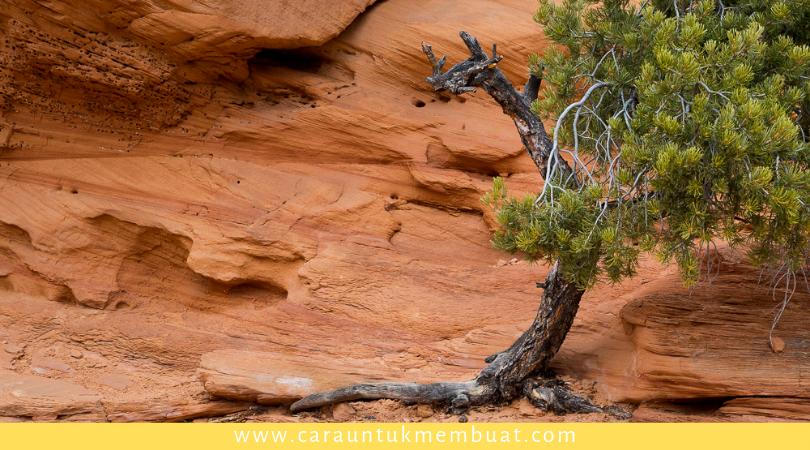 Juniper Tree on Canyonlands 13