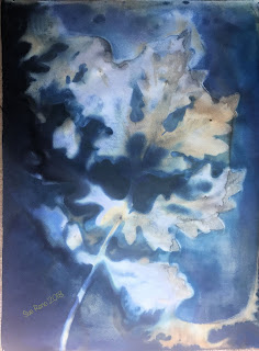 Wet cyanotype_Sue Reno_Image 439