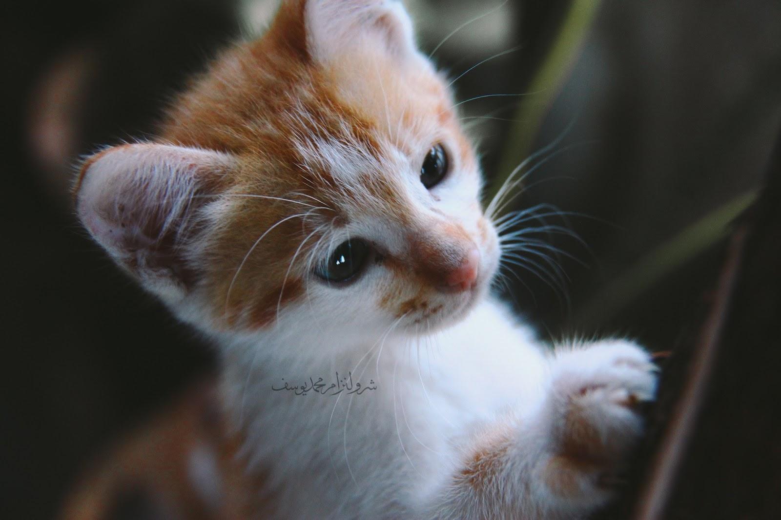 Anak Kucing Yang Comel Dan Riang - 7