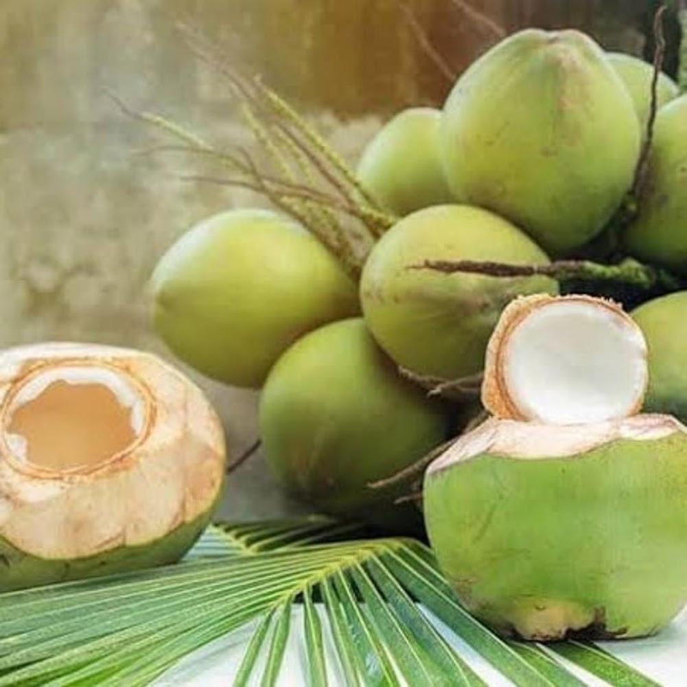bibit kelapa hibrida unggulan Kota Administrasi Jakarta Pusat