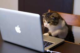 Menggunakan Teknologi Dengan Kucing Kesayangan Kamu