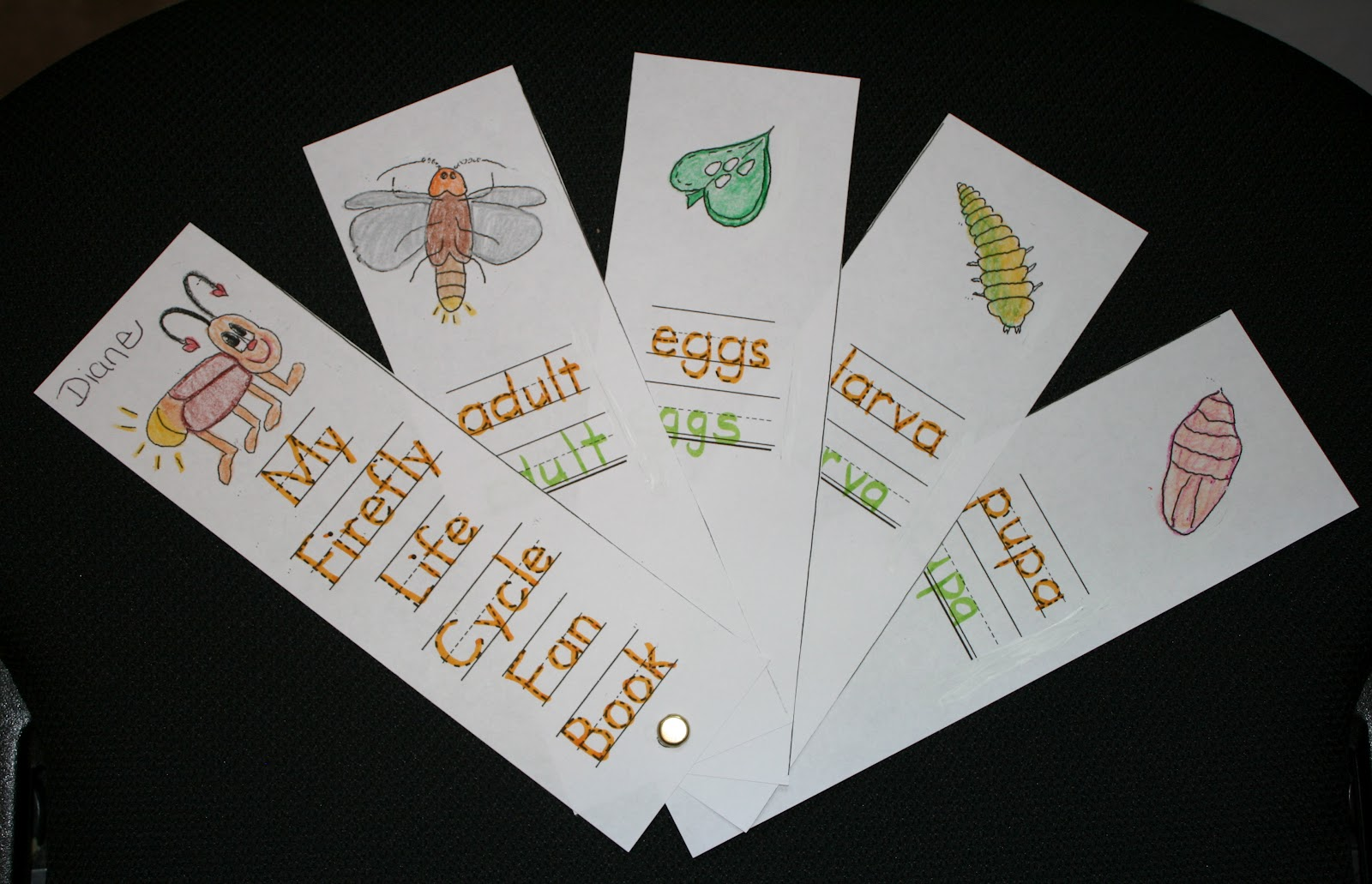 Classroom Freebies Firefly Packet
