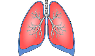 Simptom Dan Punya Adanya Cecair Dalam Paru-paru