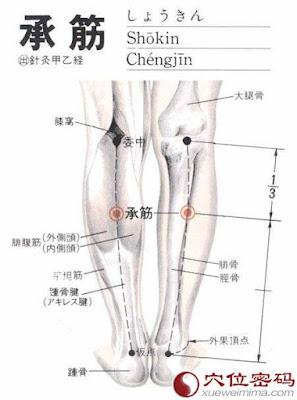 承筋穴位 | 承筋穴痛位置 - 穴道按摩經絡圖解 | Source:xueweitu.iiyun.com