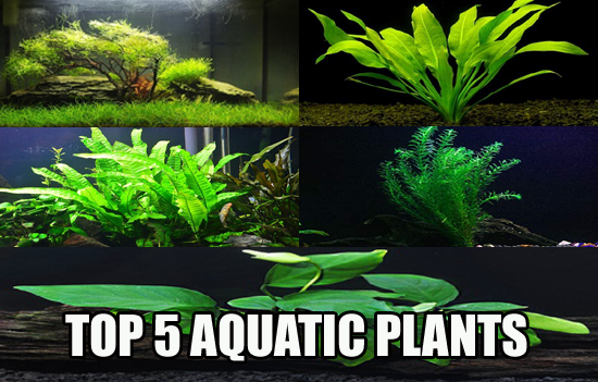 Best 5 Fresh Water Aquarium Plants