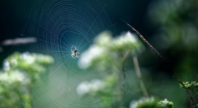 Plant-based Spider Silk Could Replace Single-use Plastics In Many Consumer Products