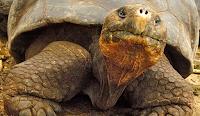 Galapagos Arewa24
