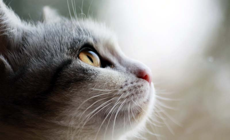 Five Ways to Support Your Pet's Vision
