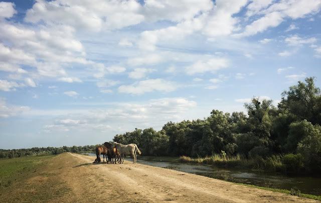 Drumul cu pricina, Delta Dunarii