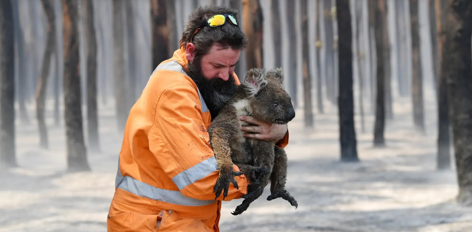 1 Billion Animals Have Reportedly Died in Australia's Wildfires