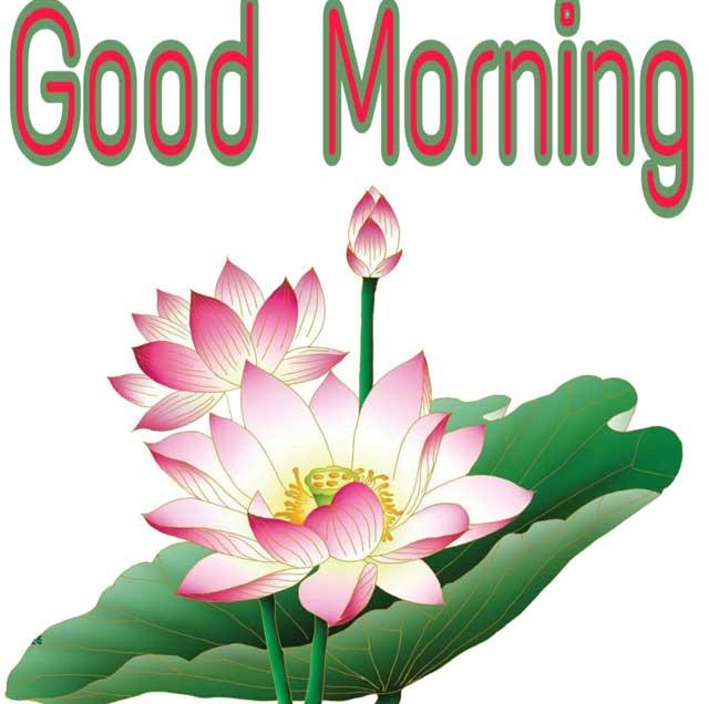 Good Morning Lotus Images