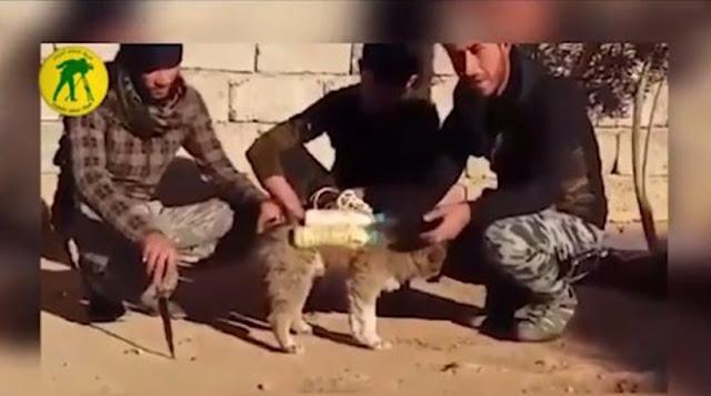ΣΟΚΑΡΙΣΤΙΚΟ! Οι τζιχαντιστές χρησιμοποιούν σκύλους για βομβιστές αυτοκτονίας! (ΒΙΝΤΕΟ ΝΤΟΚΟΥΜΕΝΤΟ)