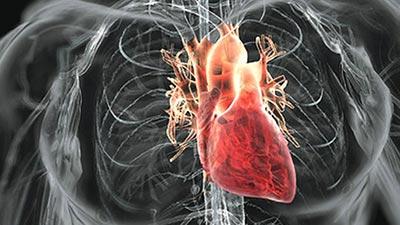 Mengapa Rokok Bisa Menyebabkan Masalah Bagi Jantung? Inilah Alasannya !
