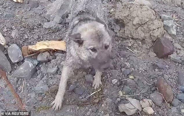 В Норвегии, на месте недавнего оползня, спасатели обнаружили выжившую собаку