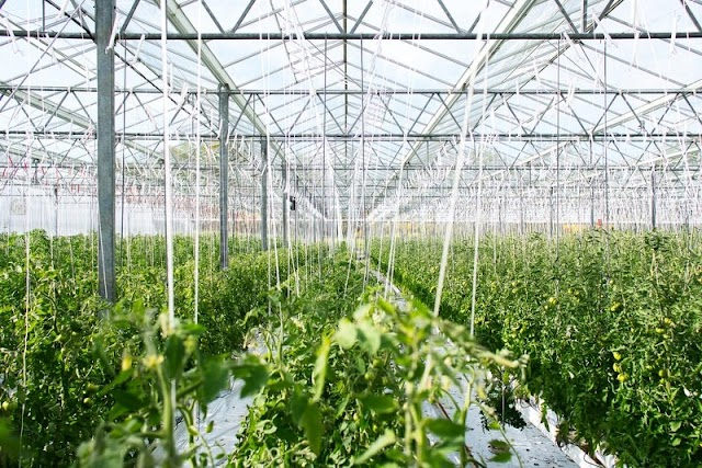 Budidaya sayuran Aeroponik Dengan Greenhouse Untuk Pengisi Waktu