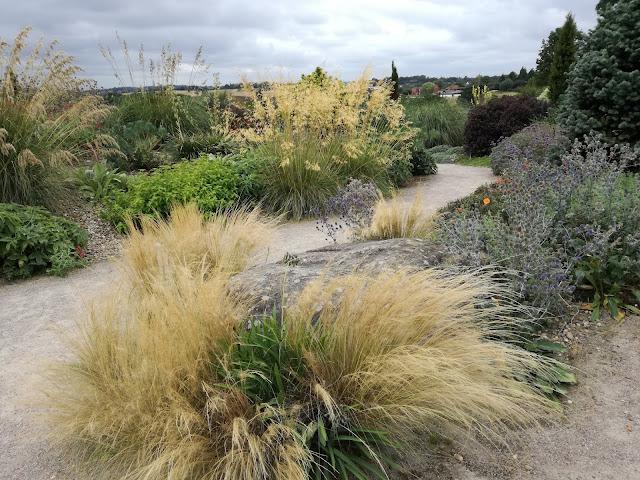 suchy ogród, ogród angielski, trawy w ogrodzie