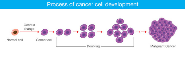 Process of cancer cell development