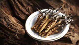 Manfaat Cordyceps