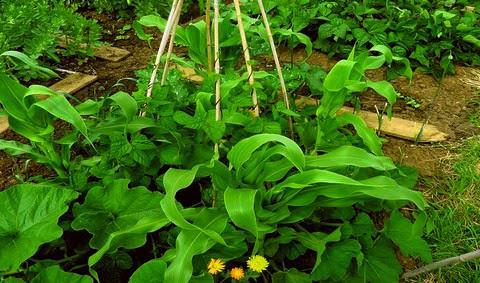 plantas que te curan