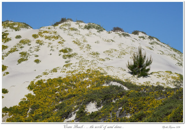 Crane Beach: ... the world of sand dunes...