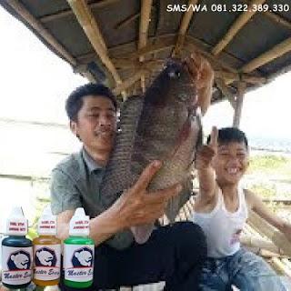 Oplosan Essen Ikan Nila