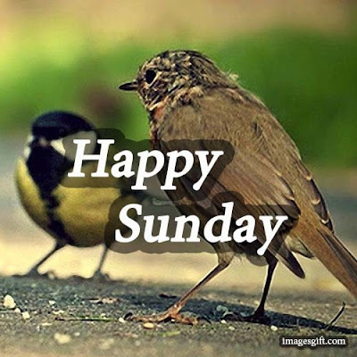 happy sunday images free download