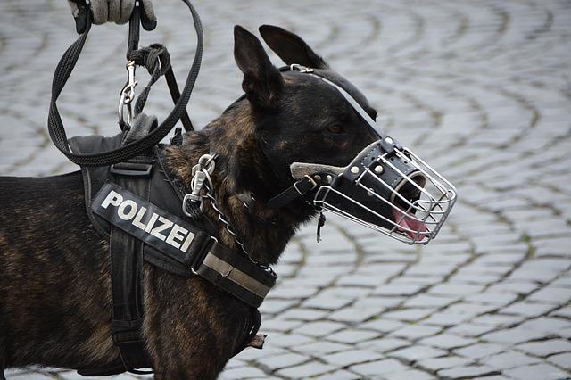 K9 police dogs