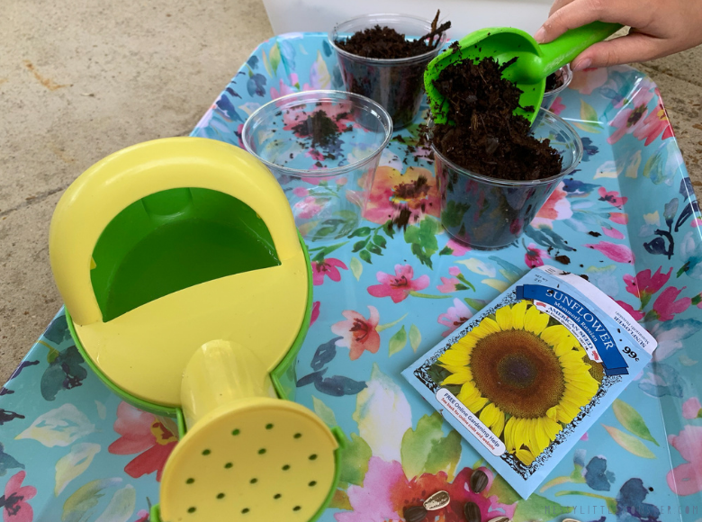 planting sunflowers in pots
