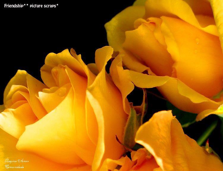 Boa Noite Means: MEDELLIN LOVE