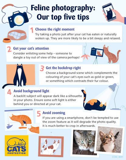 Feline photography top tips infographic