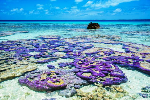 O espetáculo dos corais nas Ilhas de Tahiti