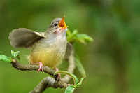 चिड़ियाँ