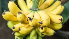 Diseases in banana plant and tree