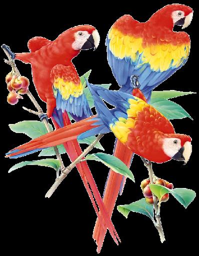 Perroquets.png