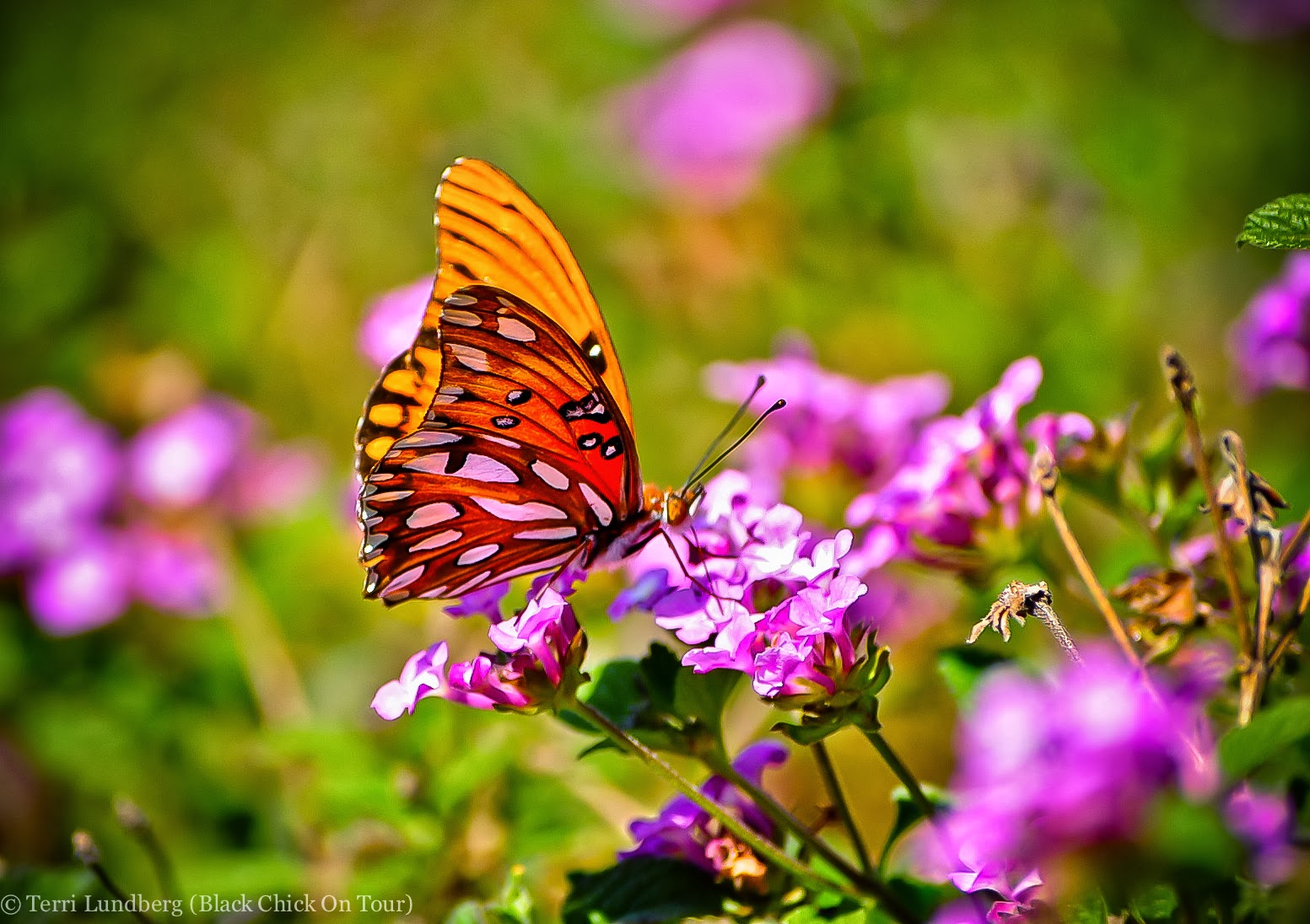 butterfly garden plants flowers Plants to Attract Butterflies to Your Backyard