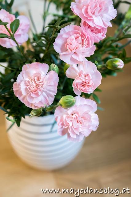 Nelken in der Vase
