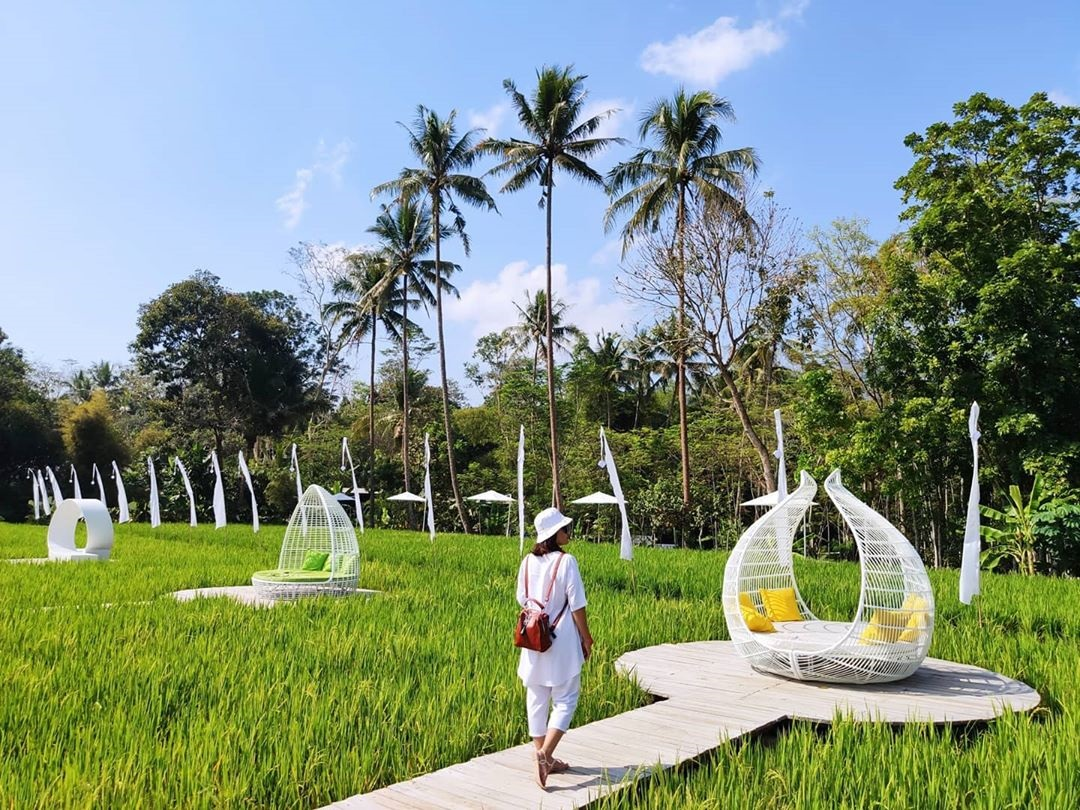 Wisata Sawah Magelang