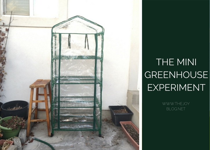 Mini plastic greenhouse with shelves | The Ongoing Mini Greenhouse Experiment // WWW.THEJOYBLOG.NET